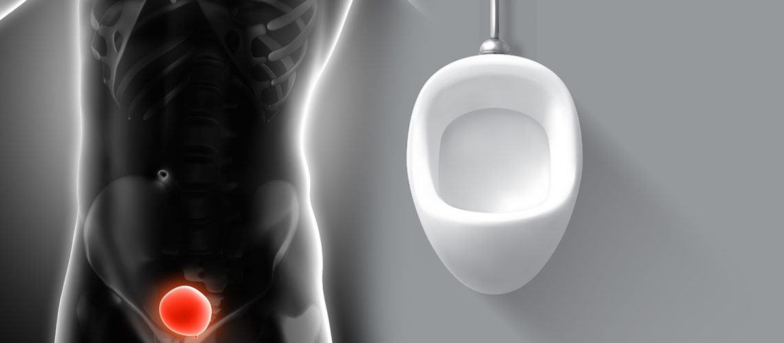 3D render of a medical image of a male figure with bladder highlighted